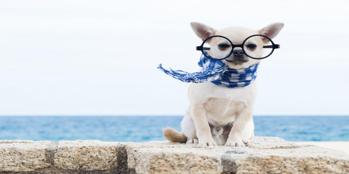 Hãy may thêm những phụ kiện xinh xắn cho chú cún cưng