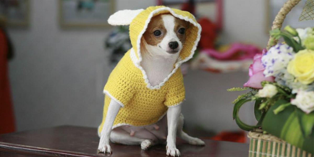 Những bộ quần áo tự may giúp bảo vệ chú cún trong nhiều trường hợp
