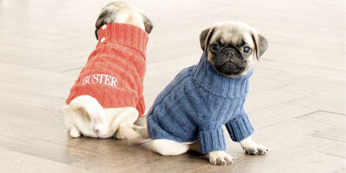 Hãy bảo vệ cún cưng của mình bằng những bộ đồ tự may độc đáo